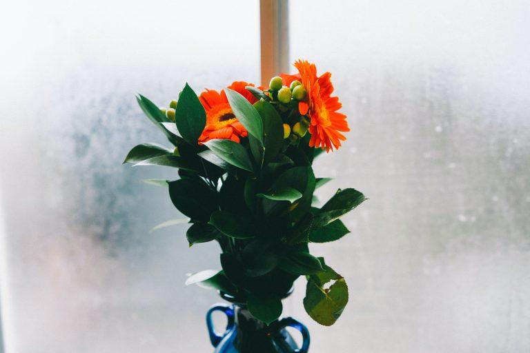 De mooiste oranje bloemen voor in huis